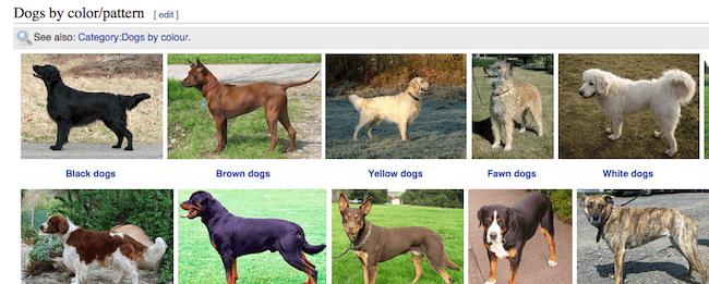 wikimedia-search