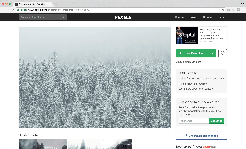 winter-treesphoto-from-pexels