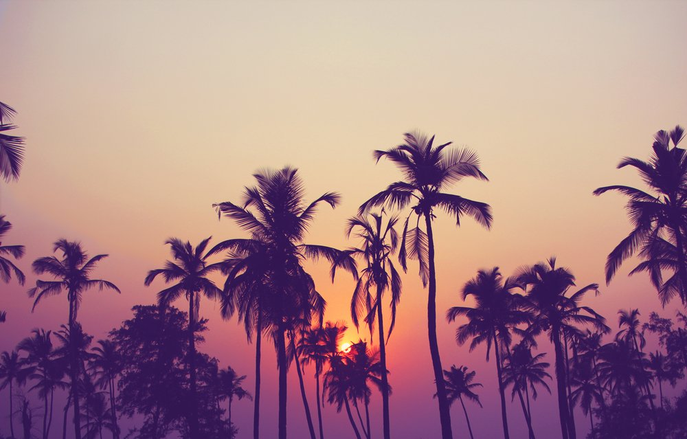 Palm tree silhouettes in front of a sunset