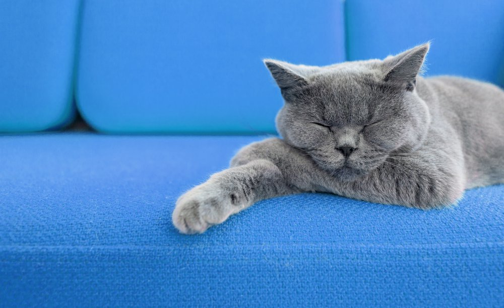 A cat sleeping on a blue couch.