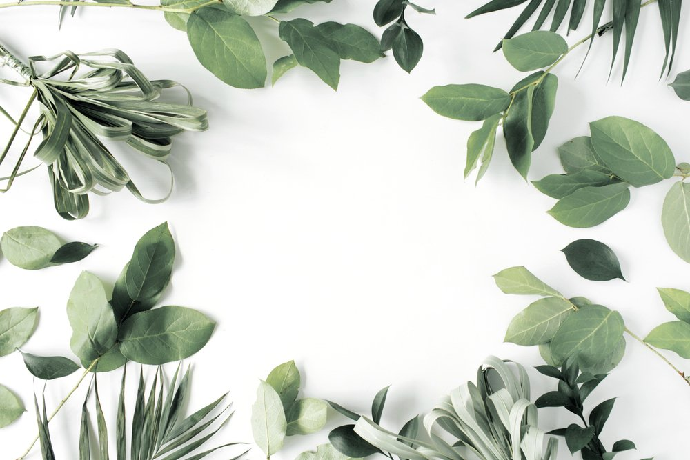Green leaves in a circle on white background