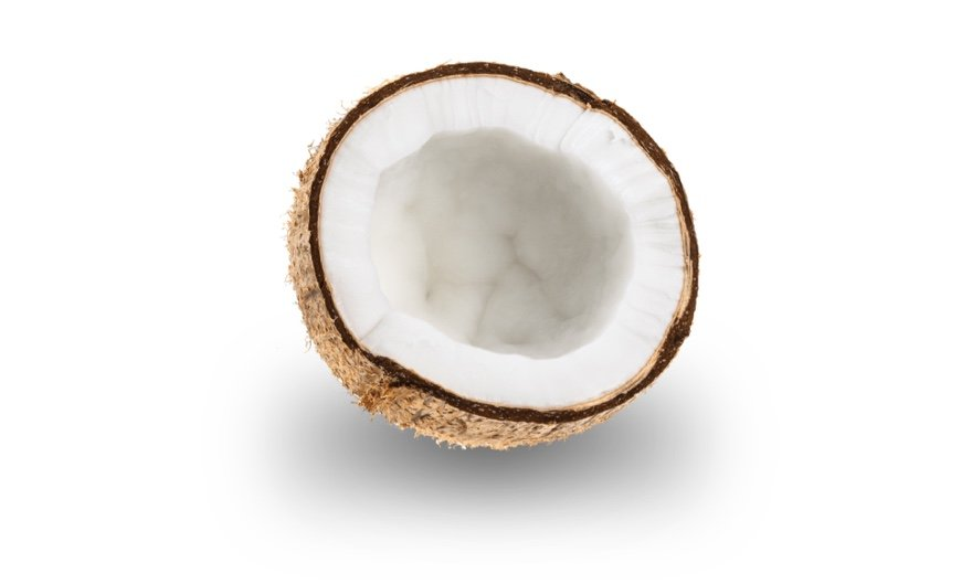 coconut sitting