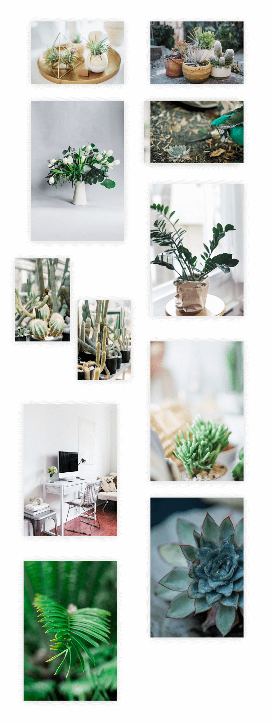 Get a free plant nursery layout pack for divi elegant themes blog - Api key divi ...