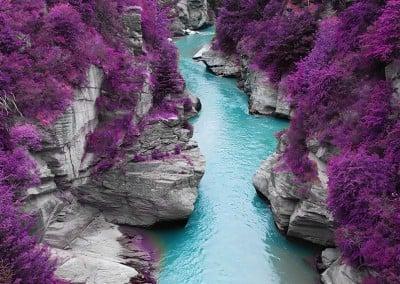 purple-foliage